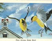 New Jersey Postcards - State Bird Postcards - Vintage Postcards
