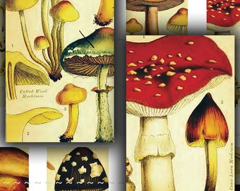 Instant Digital Download Vintage Mushrooms Morels Collage Sheet 1x2 Domino Antique Fungus Fungi Mycology Botanical Art Illustrations (55)