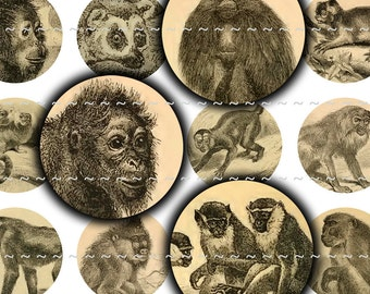 "Instant Digital Download Collage Sheet Vintage Antique Old Primates Monkeys Gorilla Chimpanzee 1"" Inch Circles Bottle Caps (33)"