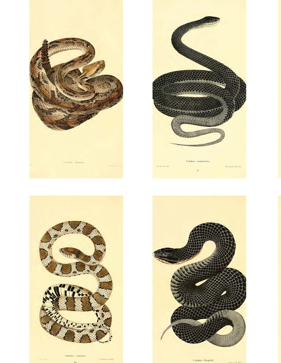 Digital Download Collage Sheet Vintage Snakes Reptiles 1x2 Domino