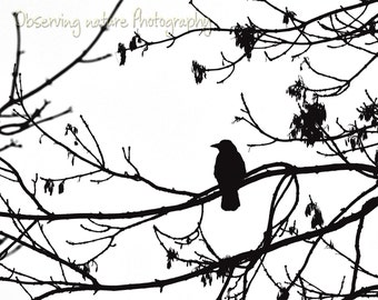 Crow Shadow Fine Art Photography Download