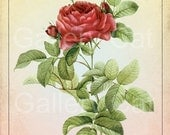 Antique Red Rose Digital Collage Sheet Instant Download Greeting Card Paper Crafts Original Whimsical Altered Art by GalleryCat CS46