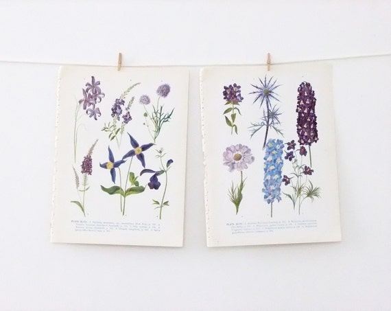 Reserved for E - 4 Vintage Flower Illustrations - floral prints in lilacs and purples