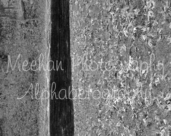 Alphabetography letter L - alphabet letter photo