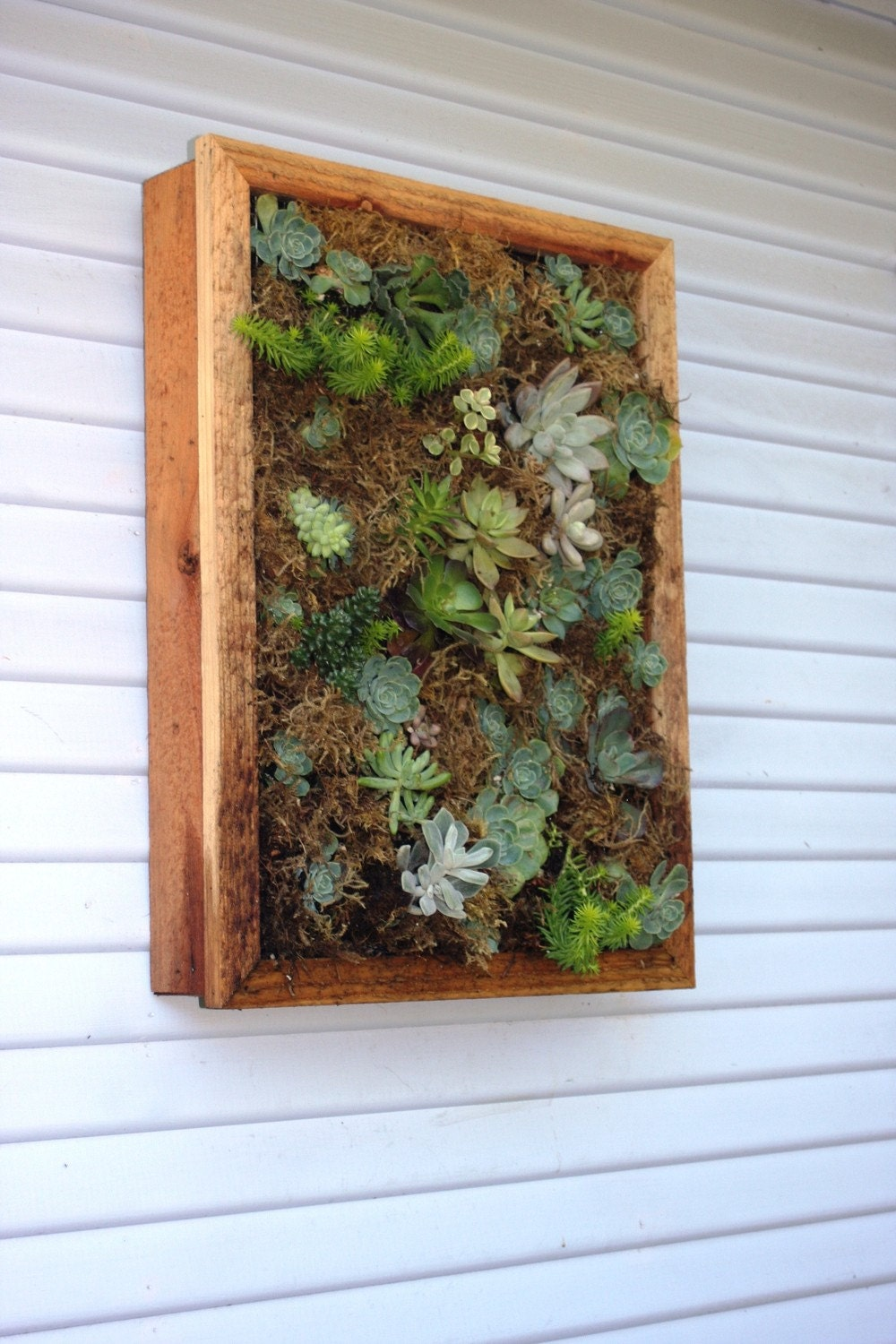 Vertical Wall Hanging Box For Succulents By Seasidegarden