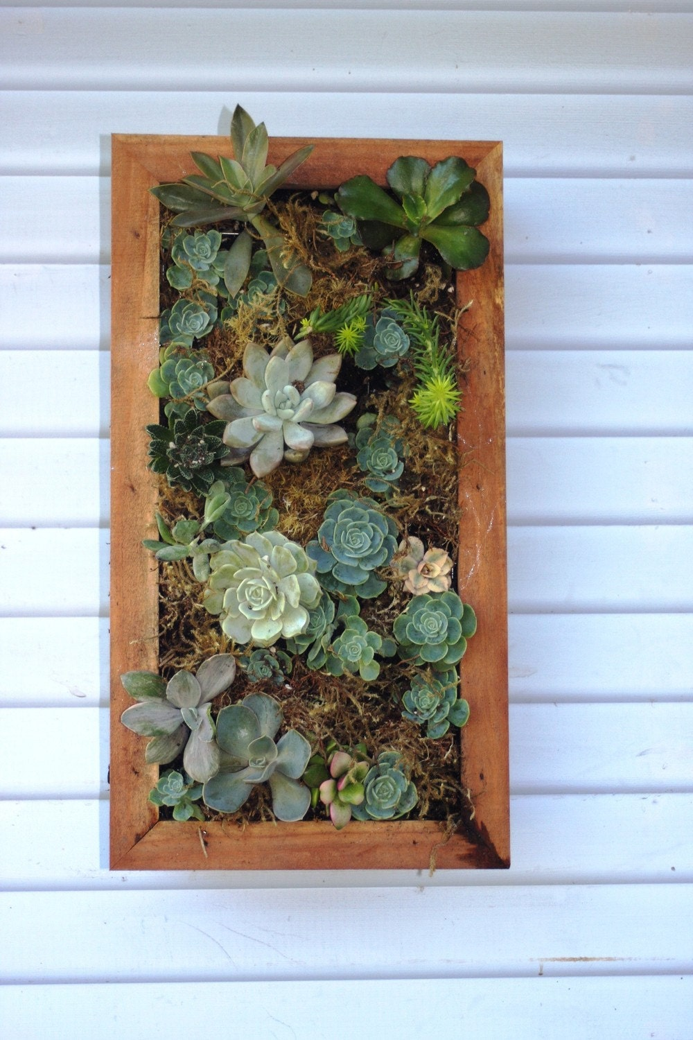 vertical hanging wall planter box for succulents