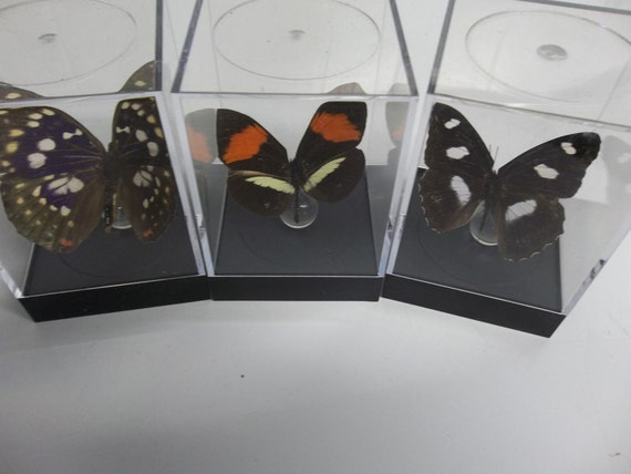 Assorted butterflies (tiny)