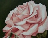 ACEO ATC Print Rose Flower Art Print Of Original Oil Flower Painting Classic Anne