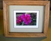 Geranium photograph in custom oak frame