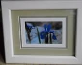 Iris's photograph in custom painted pine frame