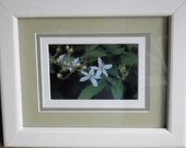 Blackberry flowers photograph in custom painted pine frame