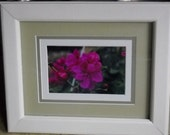 Geranium photograph in custom painted pine frame
