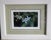 Set of floral photographs in custom pine painted frames