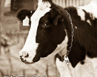 Bessy Fine Art Photography, Cattle Photography, Cow photography, Milk Cow, Holstein Cow