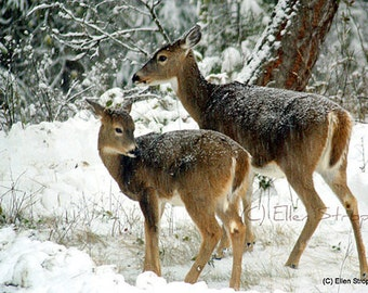 NOTE CARD, snow, deer, trees, doe, fawn, Ellen Strope, Castteam, winter, forest, whitetail deer, deer decor, cabin decor