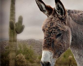 NOTE CARD Burro, Donkey, Blank Note Card, Gray, Donkey Decor, Burro Decor, Sweet, Cute, Western Decor