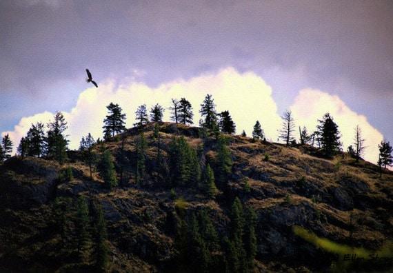 PHOTO NOTE CARD, Soaring Eagle, Clouds, Mountain, Trees, Beautiful, Sky, Blue, White