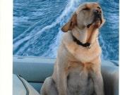 Photographic Greeting Card-Dog Days