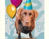 Photographic Greeting Card-Retro Chocolate Lab Birthday Card