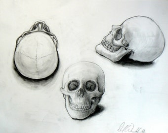 Tri Skull Study - Original Pencil Drawing