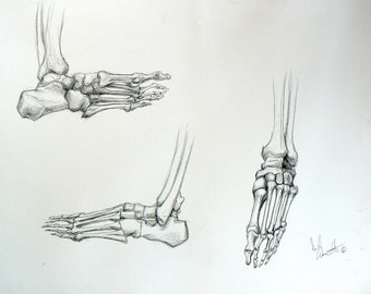 Three Boney Feet - Original Pencil Drawing