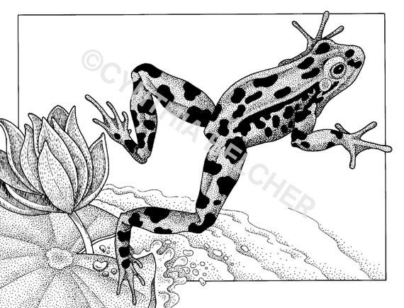 Northern Leopard Frog Drawing Pen And Ink Drawing of a