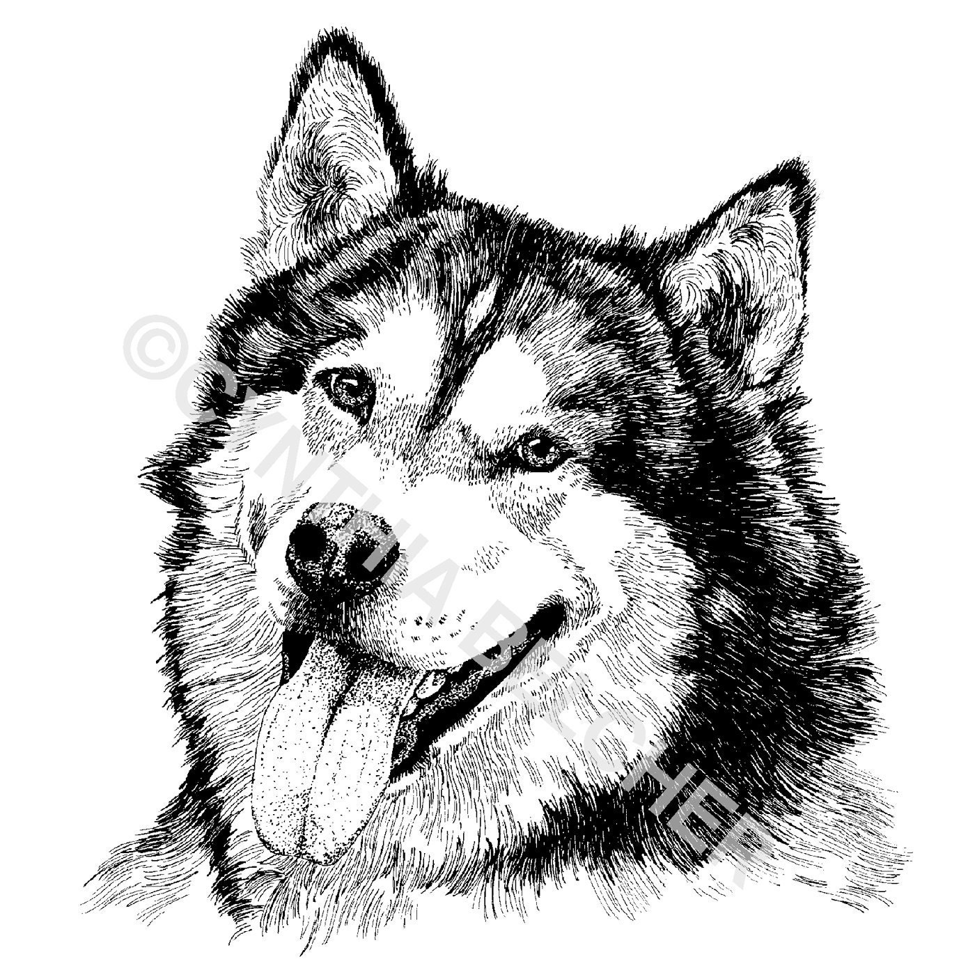 Ink Illustration: Alaskan Malamute Pen And Ink Drawing Print Signed By