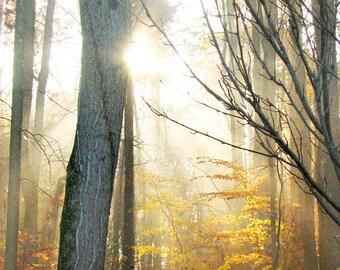 Sun Shine Trees Forest Autumn Fall - 8 x 10 art print by Dawn Smith