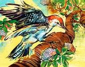 Curious Woodpecker