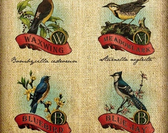 Bluebird Blue Jay Meadowlark Cedar Waxwing Monogram Hand Colored and Tinted Digital Artwork Image Transfer Download jpeg or png 300 dpi