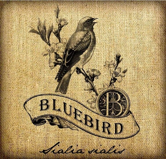 Bluebird Scroll Monogram Digital Image Transfer Download jpeg or png 300 dpi for Pillows Totes Bags Napkins Towels