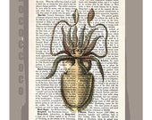 CUTTLEFISH Bottom View -ARTWORK  printed on Repurposed Vintage Dictionary page -Upcycled Book Print