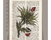 THISTLE 2 Artwork on a page from vintage Dictionary -Upcycled Book Print
