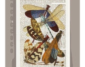 DRAGONFLY  -ARTWORK  printed on Repurposed Vintage Dictionary page -Upcycled Book Print