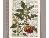 Antique French VEGETABLES/TOMATO Artwork on a page from vintage Dictionary -Upcycled Book Print