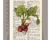 Antique French VEGETABLES/RADISH Artwork on a page from vintage Dictionary -Upcycled Book Print