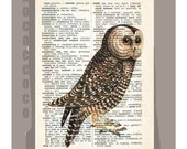 OWL3 - ARTWORK printed on Repurposed Vintage Dictionary page 8x10 -Upcycled Book Print