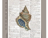 Beautiful SHELL  -ARTWORK  printed on Repurposed Vintage Dictionary page 8 x 11 -Upcycled Book Print