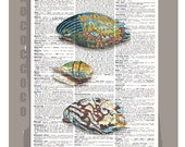 Beautiful SEASHELL  -ARTWORK  printed on Repurposed Vintage Dictionary page -Upcycled Book Print
