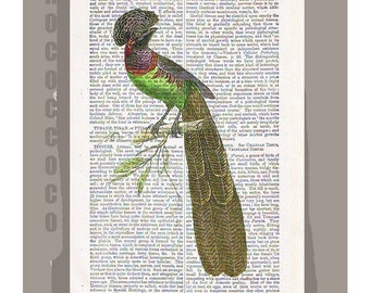 PEACOCK2-ARTWORK  printed on Repurposed Vintage Dictionary page -Upcycled Book Print