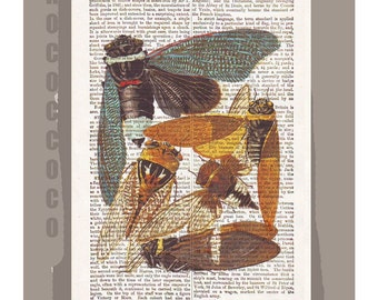 CICADA ARTWORK  printed on Repurposed Vintage Dictionary page -Upcycled Book Print