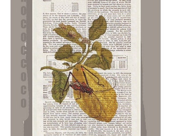 BOTANICAL1 Artwork on a page from vintage Dictionary -Upcycled Book Print
