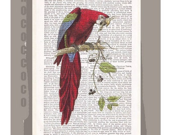 PARROT -ARTWORK  printed on Repurposed Vintage Dictionary page -Upcycled Book Print