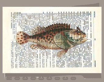 FISH2 -ARTWORK  printed on Repurposed Vintage Dictionary page -Upcycled Book Print