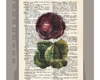 Antique French VEGETABLES/2 CABBAGES Artwork on a page from vintage Dictionary -Upcycled Book Print