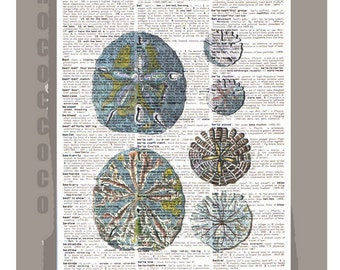 Beautiful SAND Dollar/Blue -ARTWORK  printed on Repurposed Vintage Dictionary page 8 x 11 -Upcycled Book Print