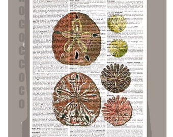 Beautiful SAND Dollar2  - ARTWORK  printed on Repurposed Vintage Dictionary page 8 x11 -Upcycled Book Print