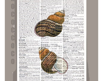 Beautiful SHELL2  -ARTWORK  printed on Repurposed Vintage Dictionary page 8x11 -Upcycled Book Print