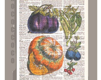 Antique French VEGETABLES 4 Artwork on a page from vintage Dictionary 8 x 11 -Upcycled Book Print