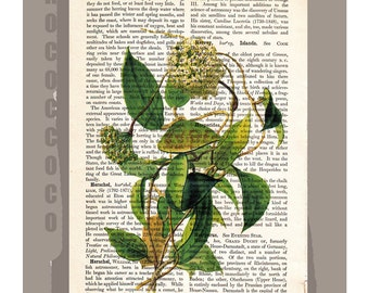 Vintage Flower -  Artwork on a page from vintage Dictionary -Upcycled Book Print